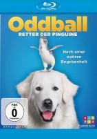 Oddball - Retter der Pinguine (Blu-ray)