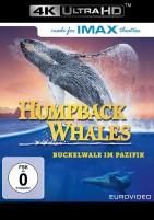 Humpback Whales - Buckelwale im Pazifik - 4K Ultra HD Blu-ray (Ultra HD Blu-ray)