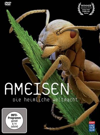 Ameisen Film