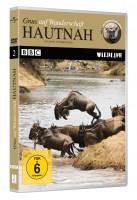 Hautnah - Gnus auf Wanderschaft - BBC Wildlife (DVD)