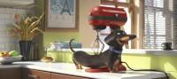 Pets - Limited Edition mit Plüschhund (DVD)