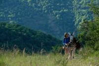 Mein Liebhaber, der Esel & Ich (Blu-ray)