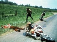 Mein Jahr 1969 - Easy Rider + Die Musik des Jahres (DVD)